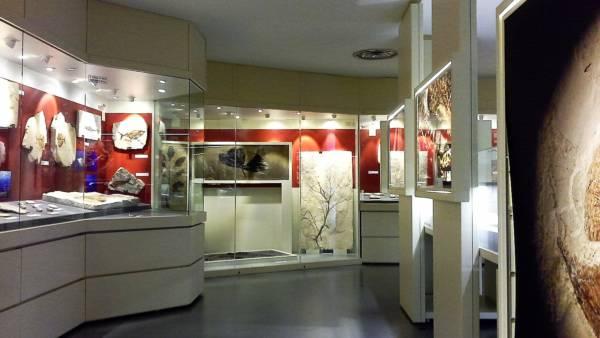Il Museo dei Fossili di Bolca