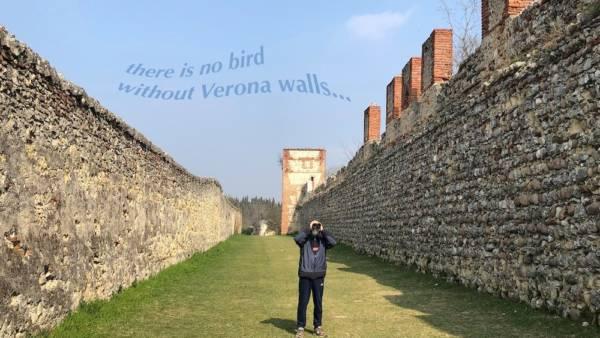 Verona Birdwatching