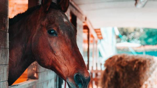 """Anteprima Fieracavalli al Murafestival con l'evento """"Cavalli, asini e arte per tutti'"""